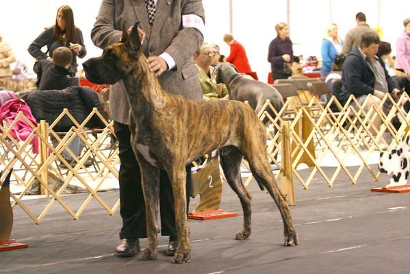 15-18 Junior Dog