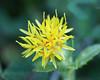 Wild flower in garden