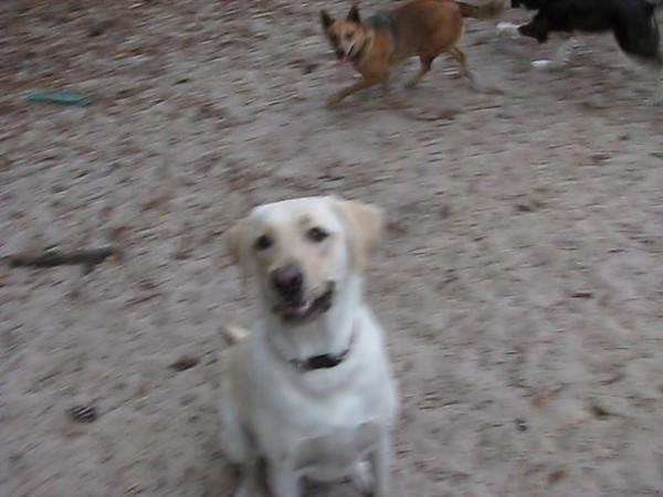 2009 VIDEOS