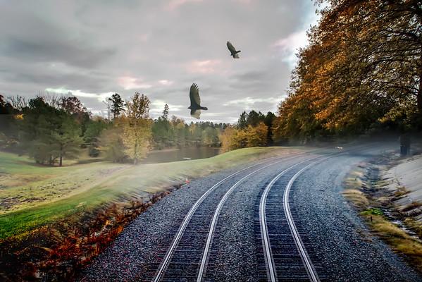 foggy nature along the train tracks