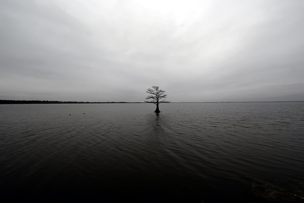 lonely tree in the lake