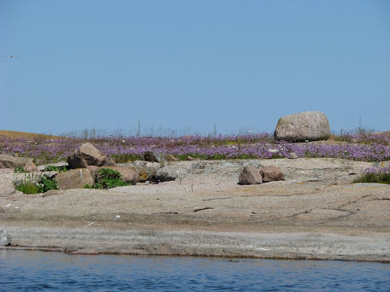 Vy över klippor med blomster
