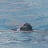 09 Feb Swim - 022