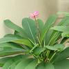 pretty flower in LaVillita