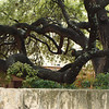 tree along riverwalk