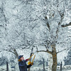 Citizen photo by Brent Braaten Linda Wilson with the City of Prince George prunes a frosted tree in the cemetary Monday morning. Wilson uses snow shoes to get in to do the work, the snow is too deep to walk in.