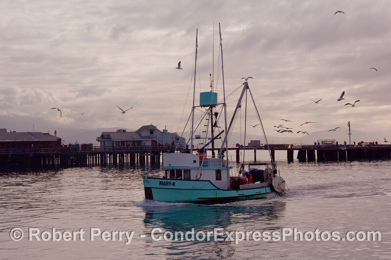 Commercial fishing vessel 'Mary-K' enters the Harbor in the early morning.  Weather forecasts of gale winds brought a lot of the fleet home for the day.