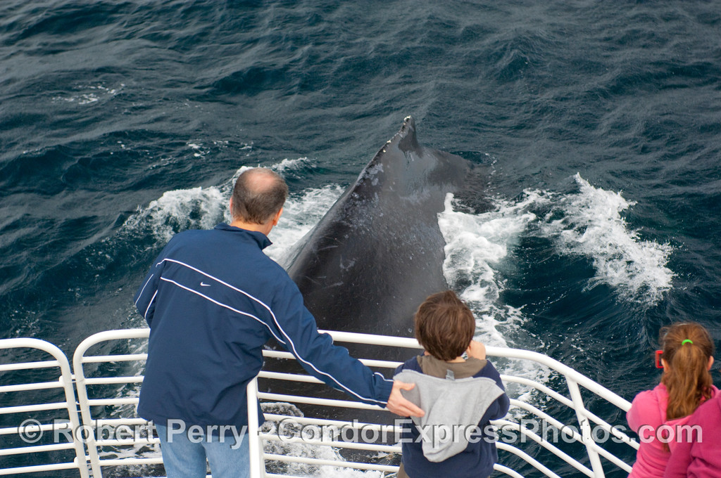 A father reaches to support  his son as the leviathan appears out of the blue - Humpback Whale(Megaptera novaengliae) passes under the bow of the Condor Express.