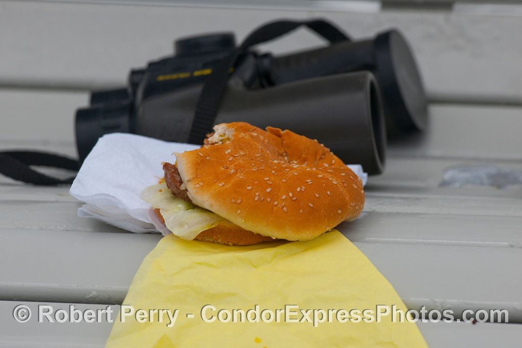 Alyssa's cold hamburger...tells all you need to know about how many great sightings we had this day.