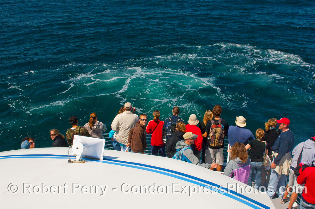 Passengers on the bow of the Condor Express stare in disbelief at the foam in the water marking the splashdown point for a Humpback Whale that breached very close to the boat (Megaptera novaengliae).