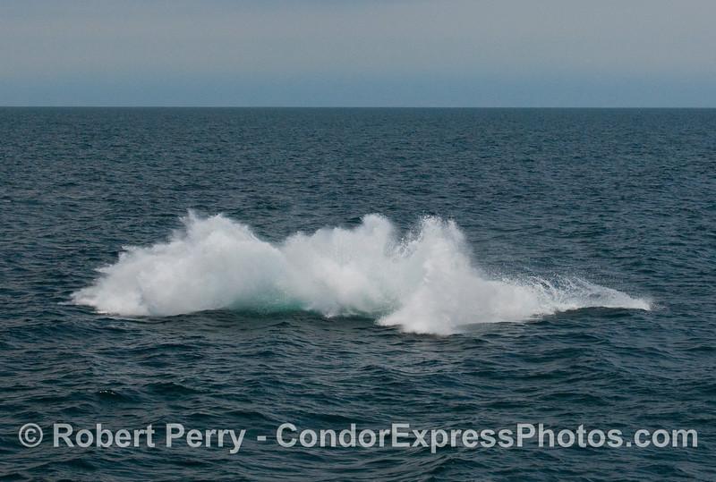 Humpback Whale breach (Megaptera novaengliae):  Image 8 of 8.