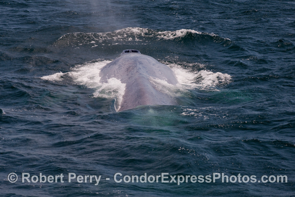 Looking from tail to head:  spouting sequence image 5 of 6.
