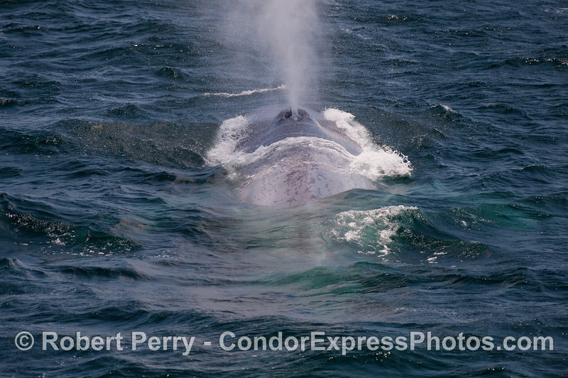 Looking from tail to head:  spouting sequence image 3 of 6.