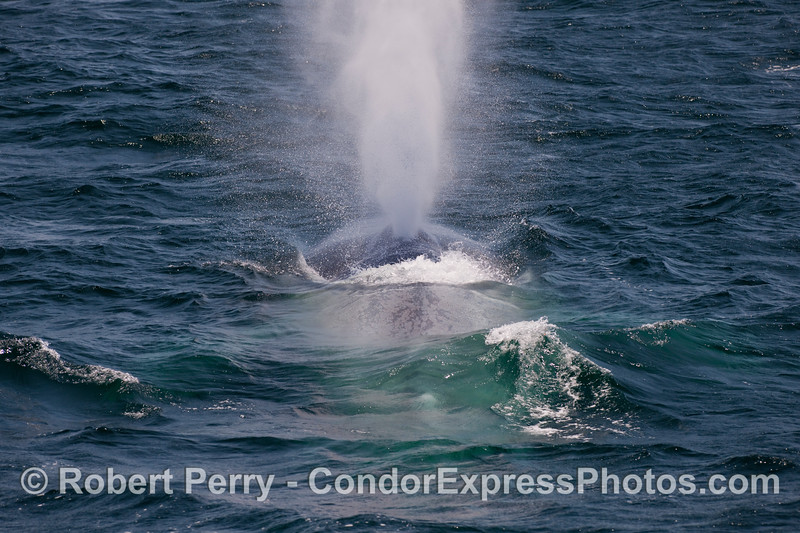 Looking from tail to head:  spouting sequence image 2 of 6.
