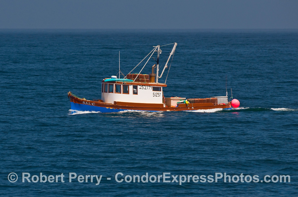 Classic wood Santa Barbara fishing vessel, the Sal-C, carrying crab traps out to the island fishing grounds.