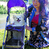Valerie Giles makes sure her 15-year-old pomeranian cross, Parfait, is comfortable before taking him for a walk in Fort George Park in his carriage. The carriage is made by Outward Hound and makes life easier for elderly or handicapped animals. Citizen photo by David Mah