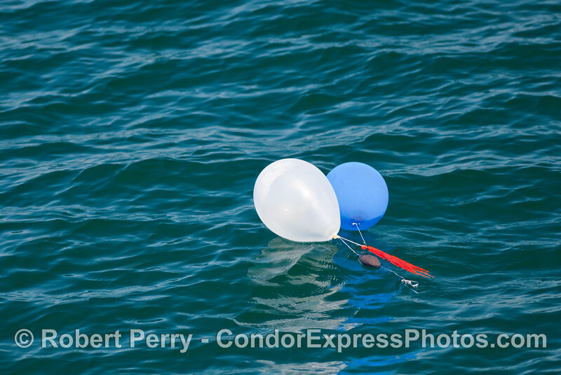 Very patriotic, but the worst debris pollution for the ocean.  Helium filled balloons always blow out to the sea and loose gas, then reside on the surface for an eternity.