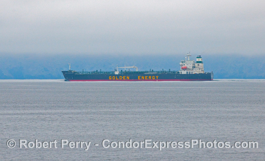 "An inbound oil tanker ""Energy Protector"" of the Golden Energy line, transits the southbound ship traffic lane just north of Santa Cruz Island in the Santa Barbara Channel.  The whales were about 2 miles south of the lanes today."