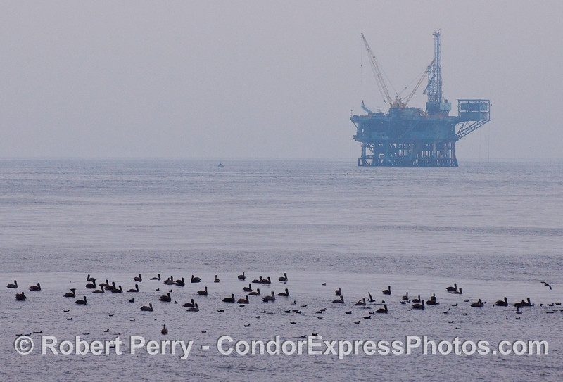 Birds line up to rest with an oil platform in the background.