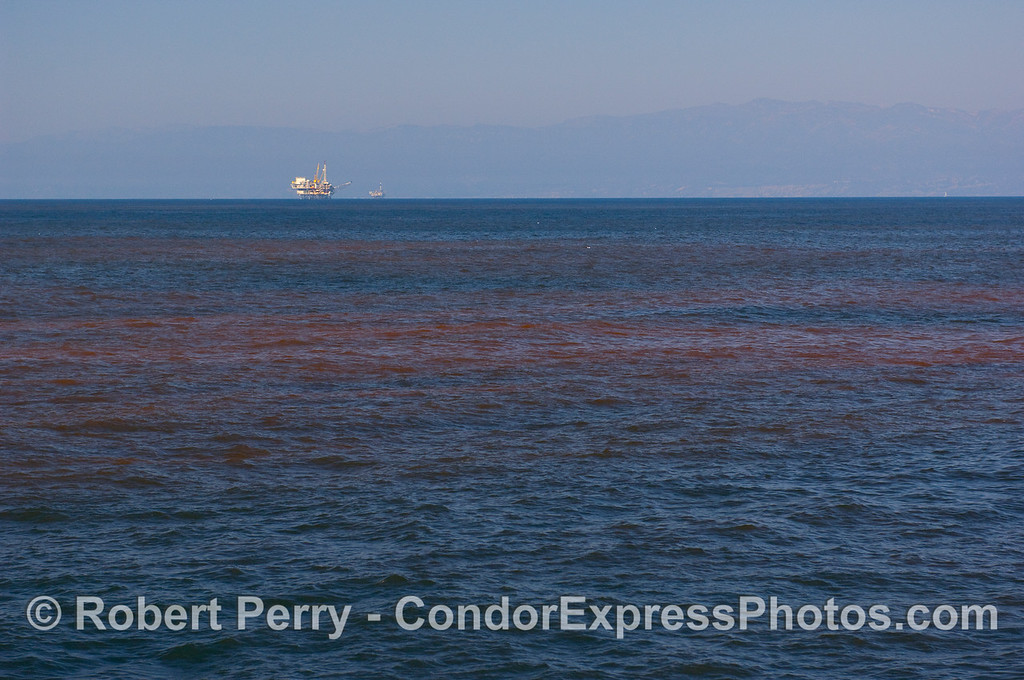 Streaks of red tide in the Santa Barbara Channel with Platform Gail in the background.