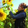 Marie Knell, admires her sunflowers in her yard at her store Painted Shell Gifts and Decor at 7th Avenue and Winnipeg Street. Marie has 3 beds full of sunflowers of various heights. Citizen photo by David Mah