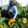 Nannette Chenard and her standard poodle Gambit, took a look at the pumpkins at her yard on Pearson Avenue. Gambit eats pumpkins and zuchinnis, so he had interest. The pumpkins which are over 16 inches in diameter where a huge surprise because the seed packages purchased from Canadian Tire said they were zuchinnis. Citizen photo by David Mah