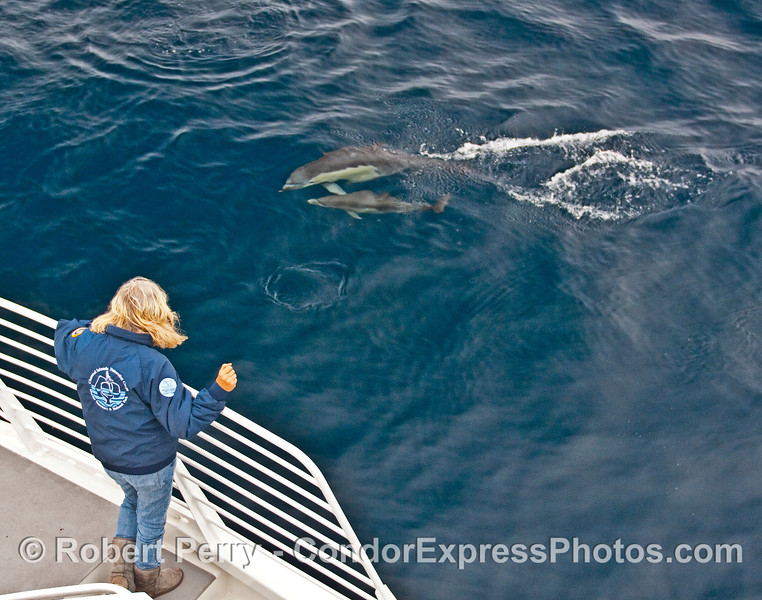 CINC naturalist observes a  Common Dolphin (Delphinus capensis) mother and calf.