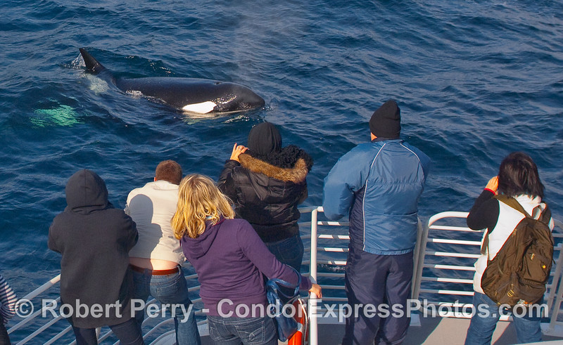 Orca comes in for a close visit...