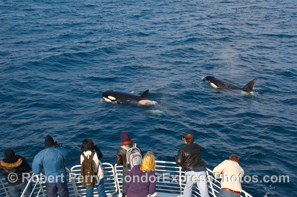 Whalers on board the Condor Express get a couple of curious visitors.