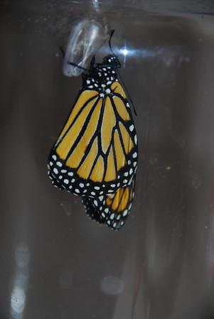 2009 Butterflies and Catapillars