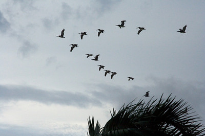 We saw some pelicans flying overhead while we were in the pool