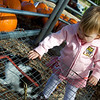 Pumpkin Patch 2009