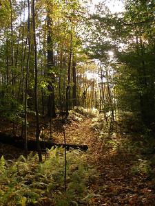 SLS_0039_loyalsock trail