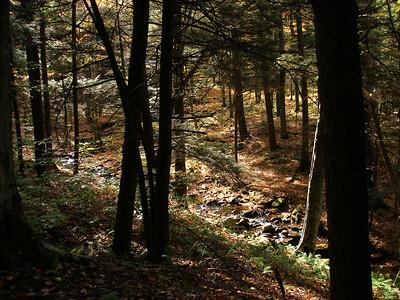 SLS_0011_loyalsock trail