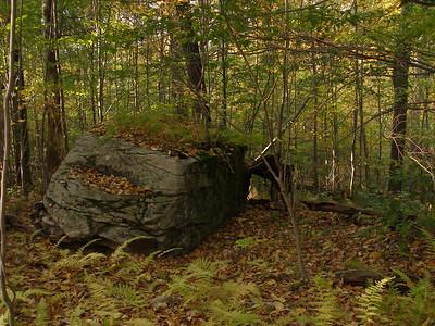 SLS_0042_loyalsock trail