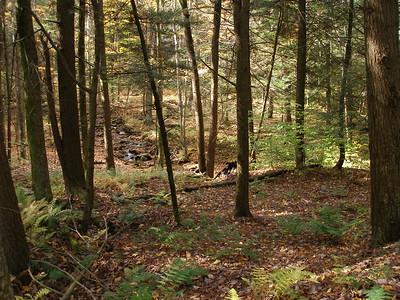 SLS_0006_loyalsock trail