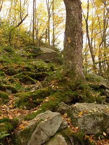 SLS_0057_loyalsock trail