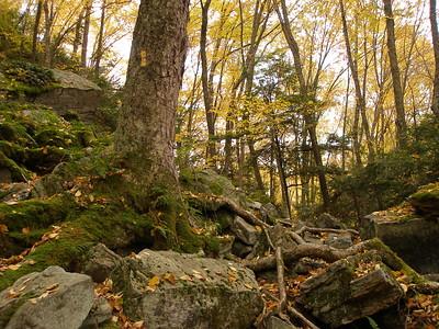 SLS_0058_loyalsock trail