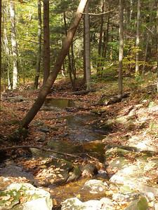 SLS_0016_loyalsock trail