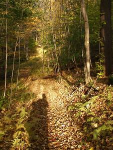 SLS_0041_loyalsock trail