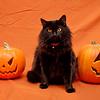 Zephyr with pumpkins