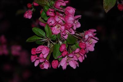 2009 Spring Flowers