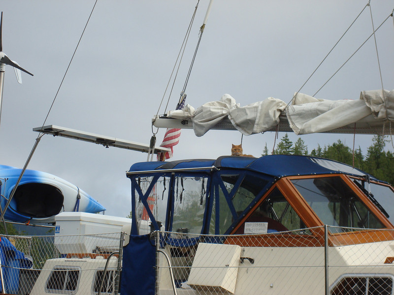Presley - otherwise known as Bimini Cat - hanging out on top of s/v Happy Camper