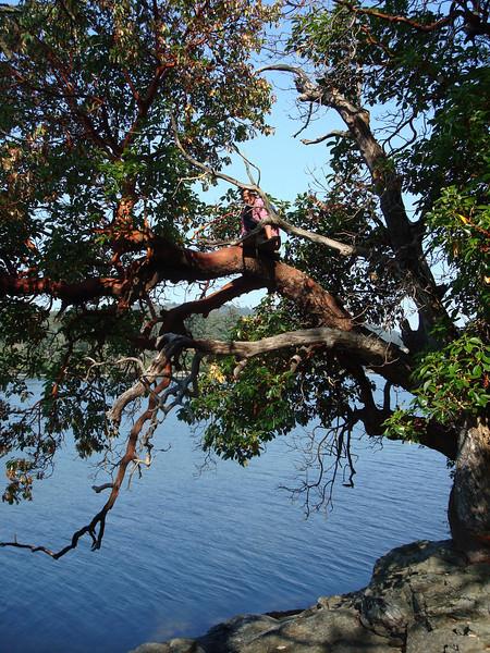 Christy climbing a tree on Cole Island