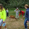 kids hanging out with the deer on the grounds of Camp Moran