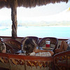 chillin' at the palapa bar