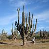cactus - BIG cactus