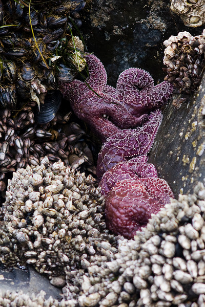 A small cluster of starfish hides in a barnacle-armored corner.