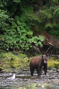 august 2009 alaska trip 024