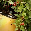 Tractor berries